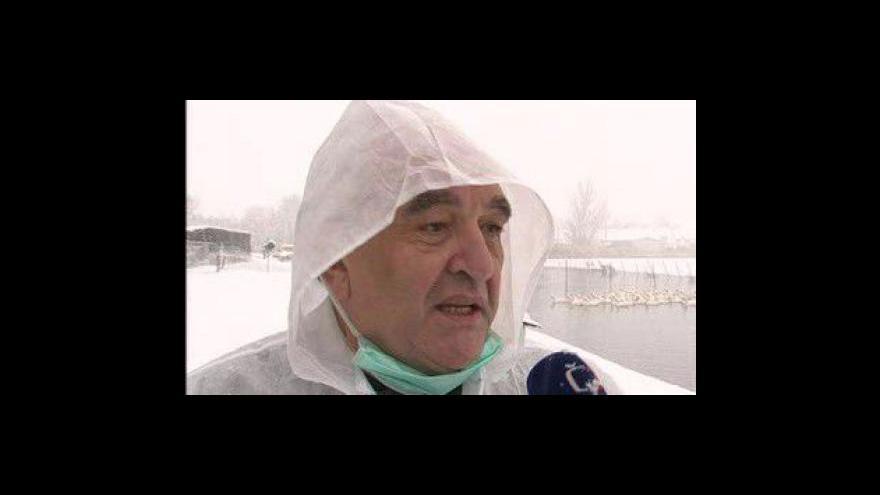 Video Veterinář testuje hodonínské husy na H5N1