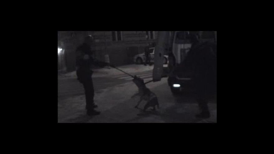 Video Strážníci odchytávají agresivního pitbulla
