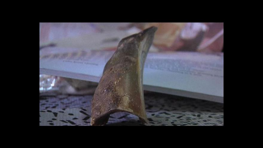Video O nosorožci jávském už jen z učebnic