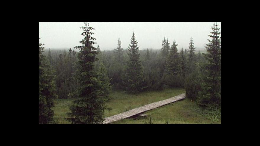 Video Šumava sází nové stromy