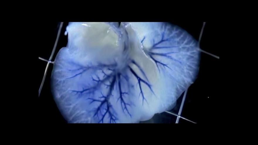 Video Vědci pracují na výrobě lidských orgánů