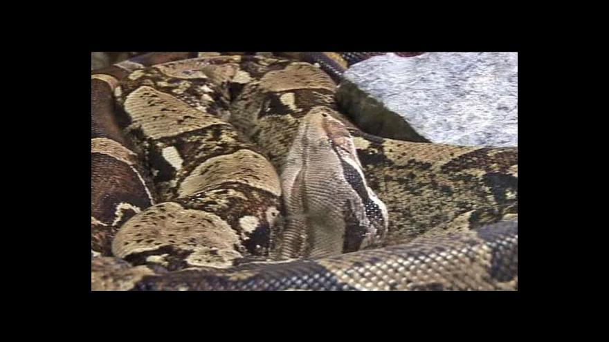 Video Prizma o pašování plazů