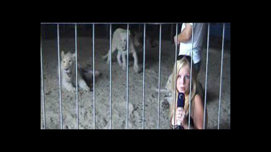 Video Reportáž Martiny Kolejové