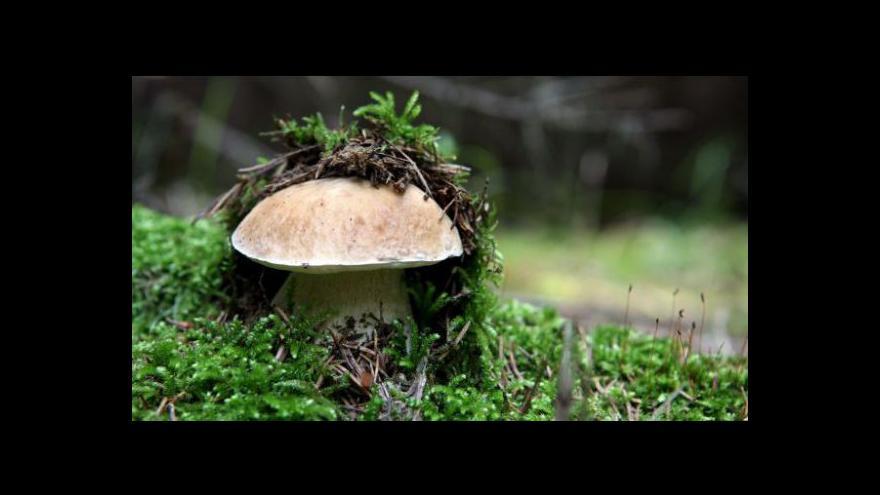 Video Zisk Lesů ČR