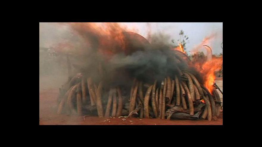 Video Keňa demonstrativně spálila pět tun slonoviny