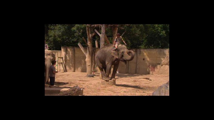 Video Sport v Zoo
