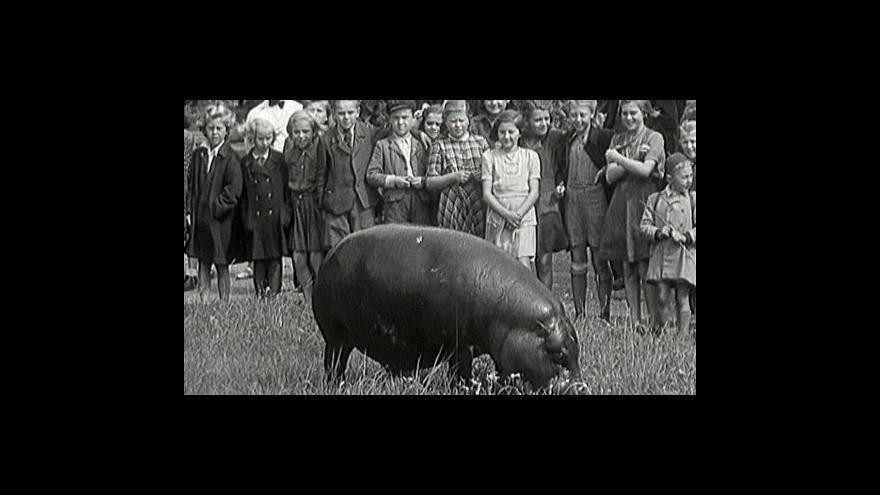 Video Pražská ZOO v minulosti a dnes