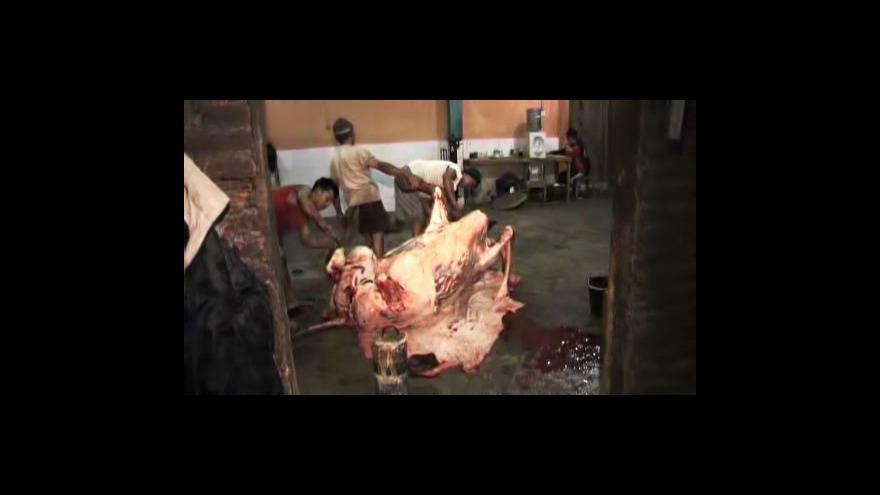 Video Austrálie zastavuje vývoz živého skotu do Indonésie