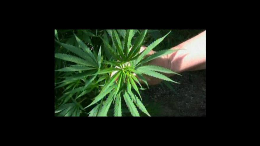Video Studio ČT24: Boj proti drogám ztroskotal
