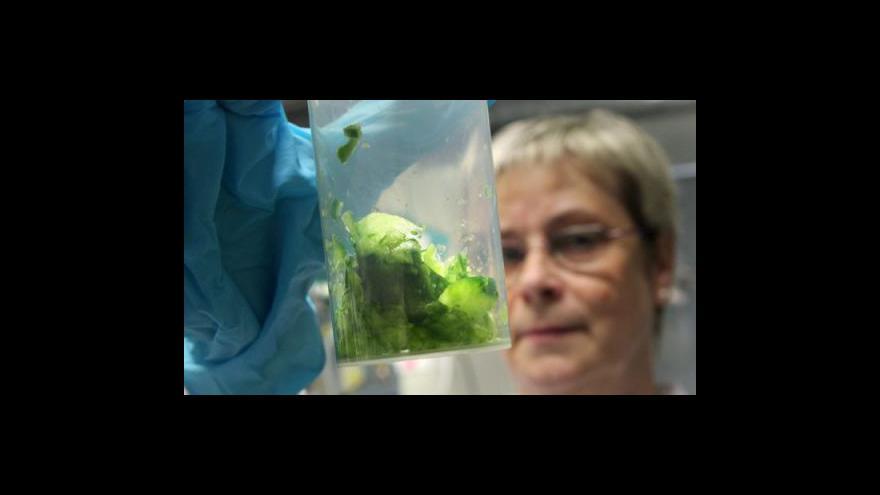 Video Studio ČT24 o nákaze střevní bakterií