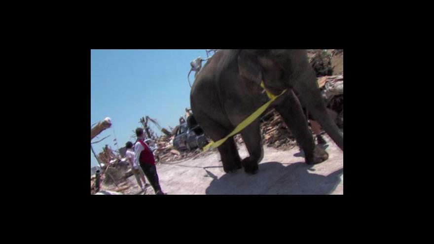 Video Slon pomáhá uklízet po tornádu