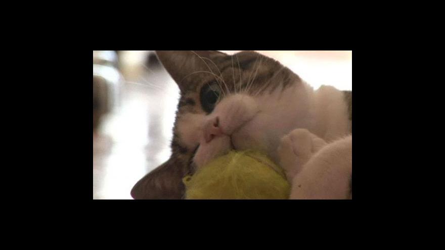 Video Argentinští mazlíčci tloustnou