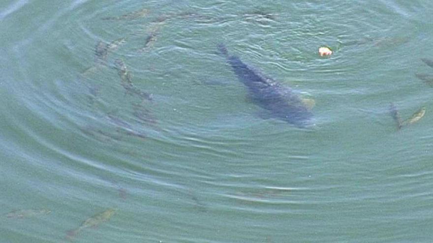 Video Sucho ohrožuje i ryby
