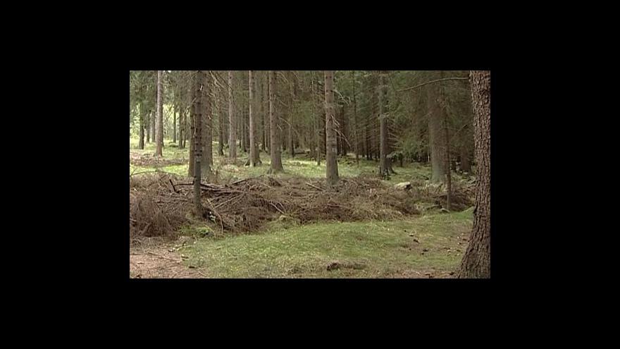 Video Šumavu trápí zloději stromů