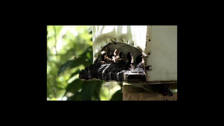 Video Nový zdroj biopaliv - jatrofa