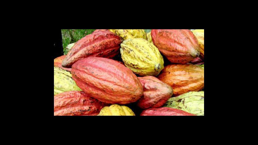 Video Kakao z Pobřeží slonoviny