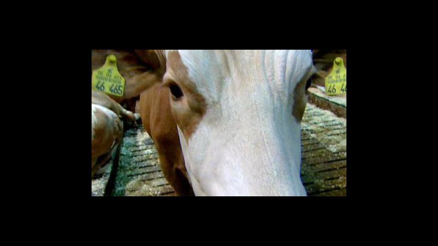 Video Bioveletrh v Norimberku