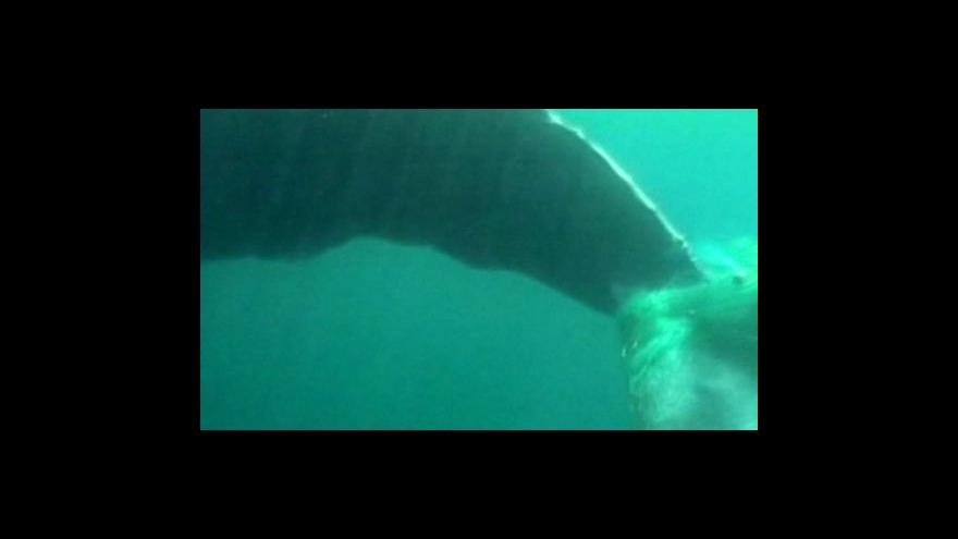 Video Zachraňování keporkaka