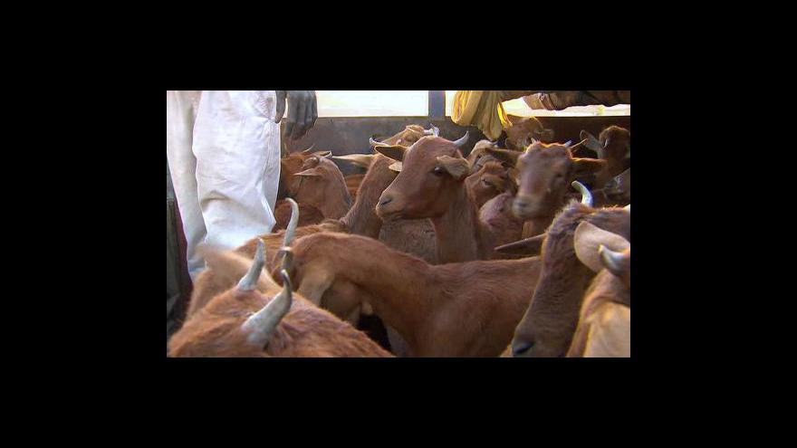 Video Kozy pomáhají v Africe