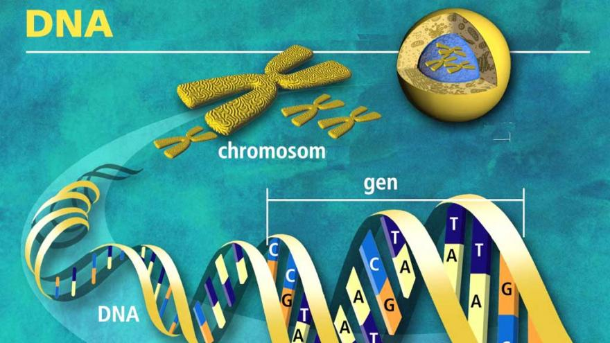 Video Genová terapie proti rakovině