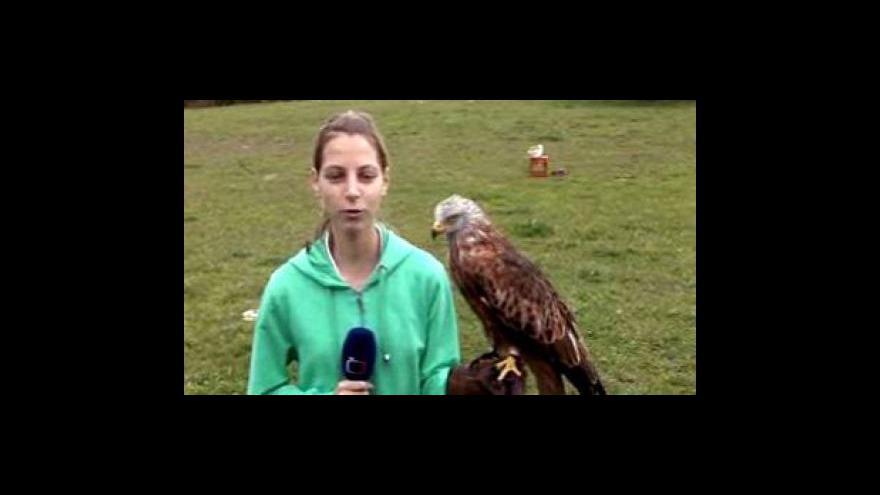 Video Reportáž Pavlíny Šrámkové