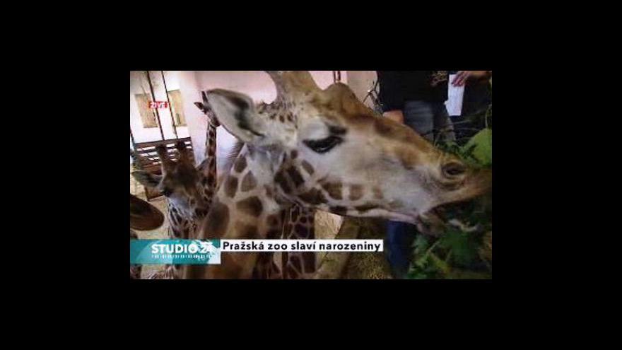 Video Studio ČT24 k přípravě narozenin pražské zoo