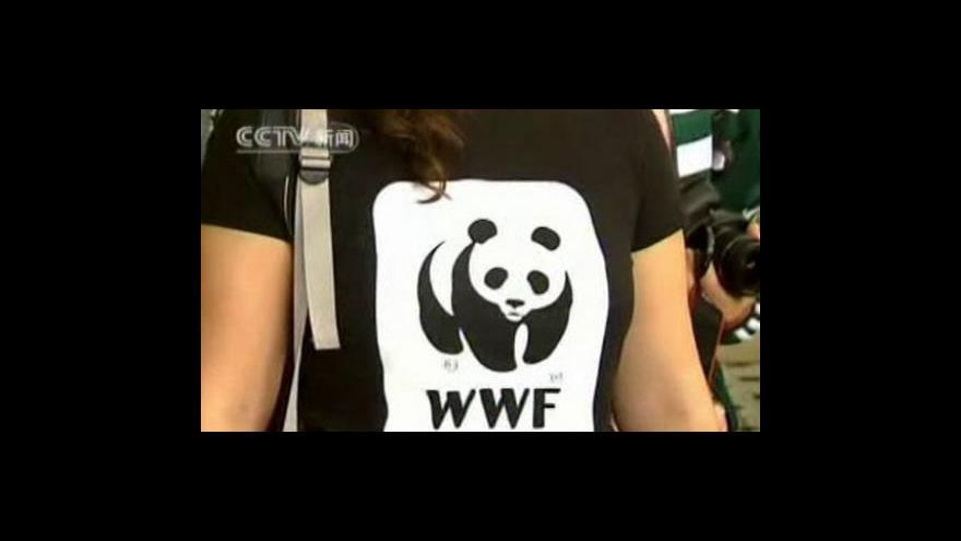Video V Číně vrcholí soutěž o ošetřovatele pand