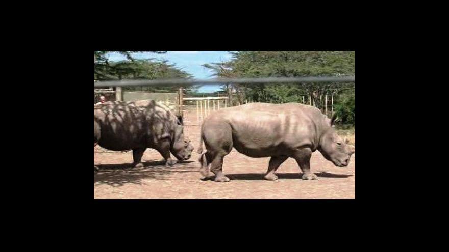 Video Lov nosorožců v Jižní Africe se rozmáhá
