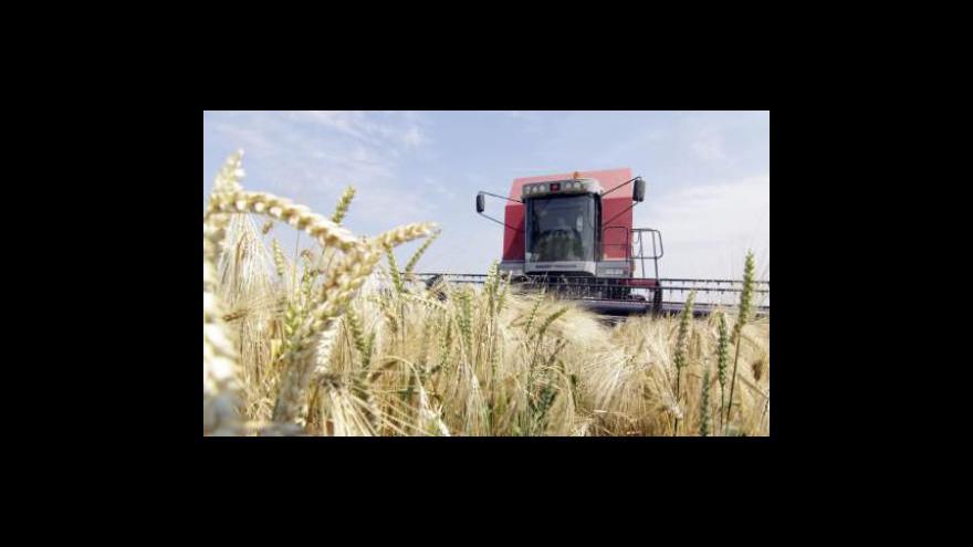 Video Mnoho chmelu, nedostatek pšenice