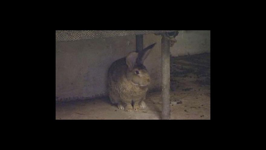 Video Ralph bydlí v kotci pro psy