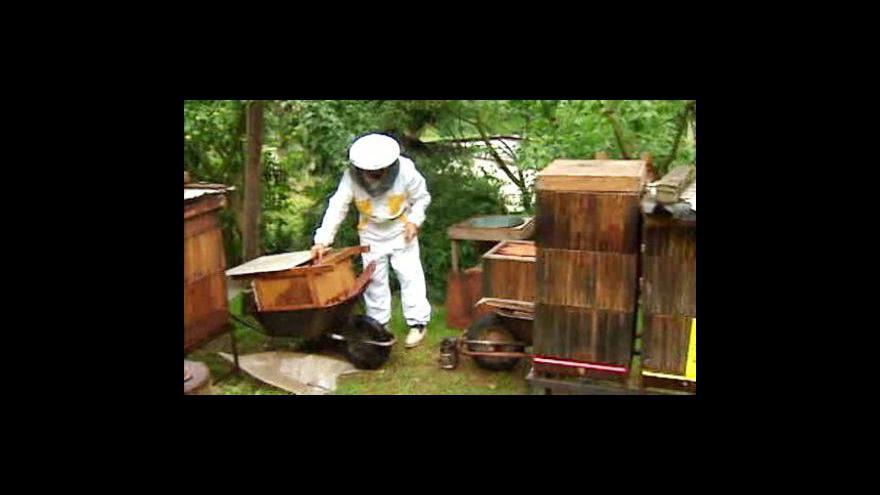 Video Čeští včelaři