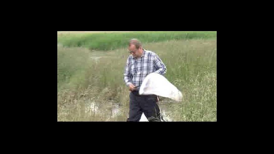 Video Moravu ničí po povodni komáři