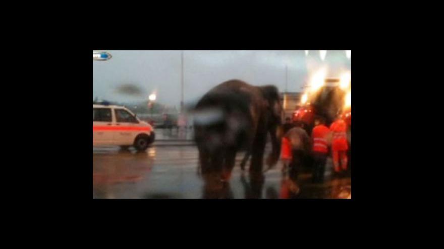 Video Uprchlý slon vyděsil Curyšany