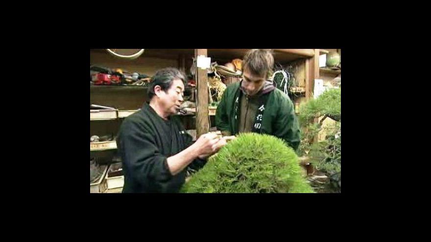 Video V Japonsku probíhají kurzy na úpravu bonsají