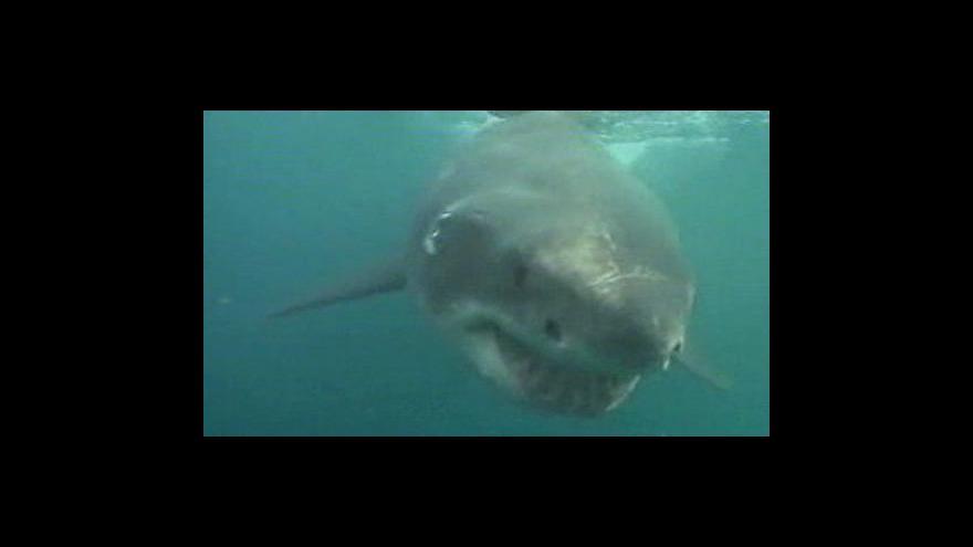 Video Žraloci ochranu před obchodování s jejich masem nezískali