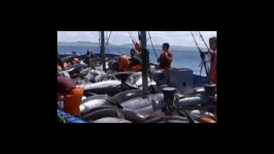 Video V Dauhá neprošel návrh zakázat obchod s tuňáky