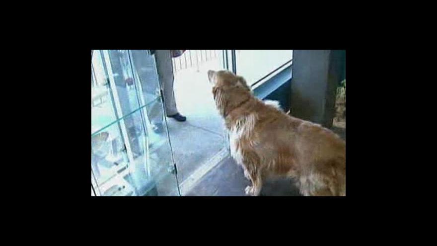 Video Pes omylem spolkl diamant
