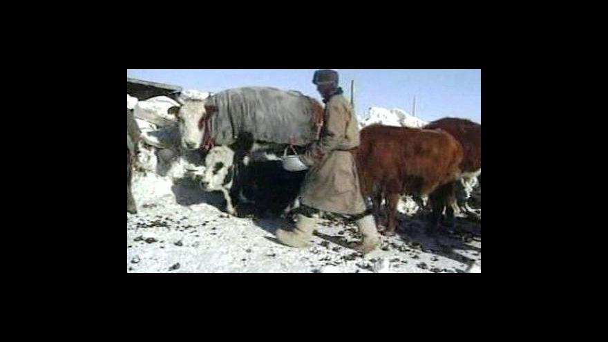 Video Mongolsko trápí mrazy
