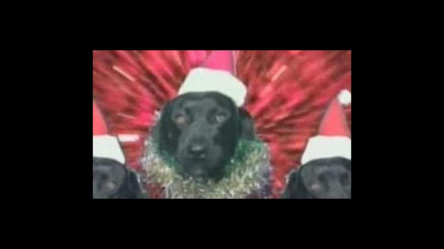 Video Vánoční koledy v podání koček a psů