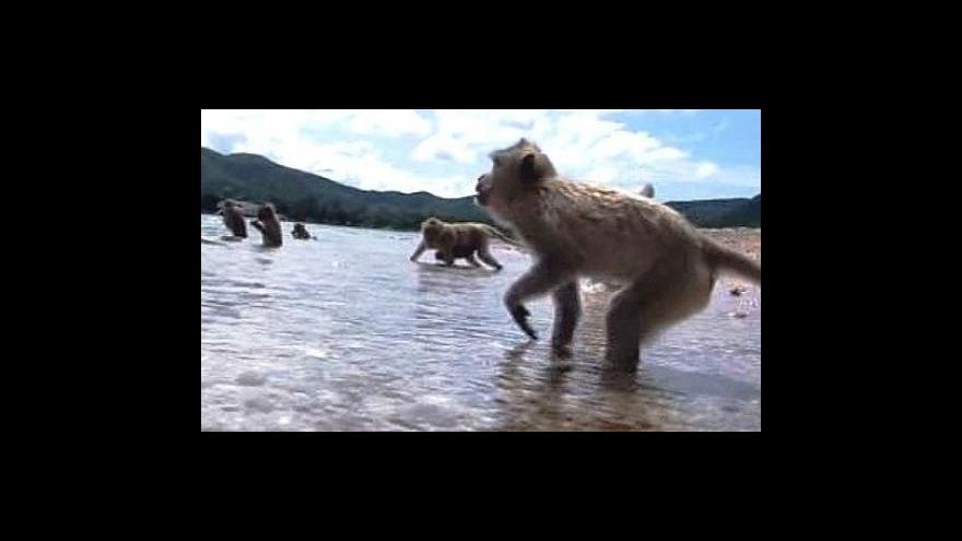 Video Krmení makaků
