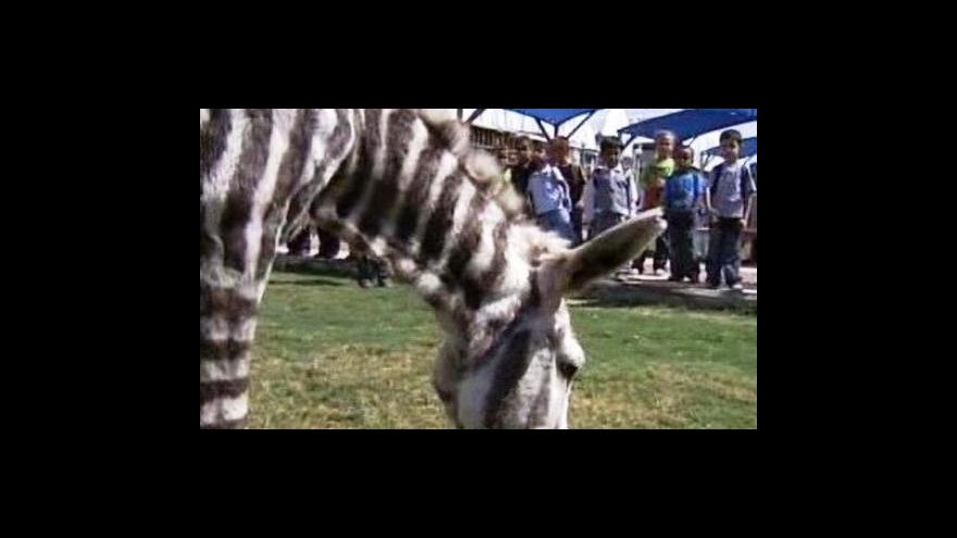 Video Zvířecí proměnu připravili v palestinské zoo