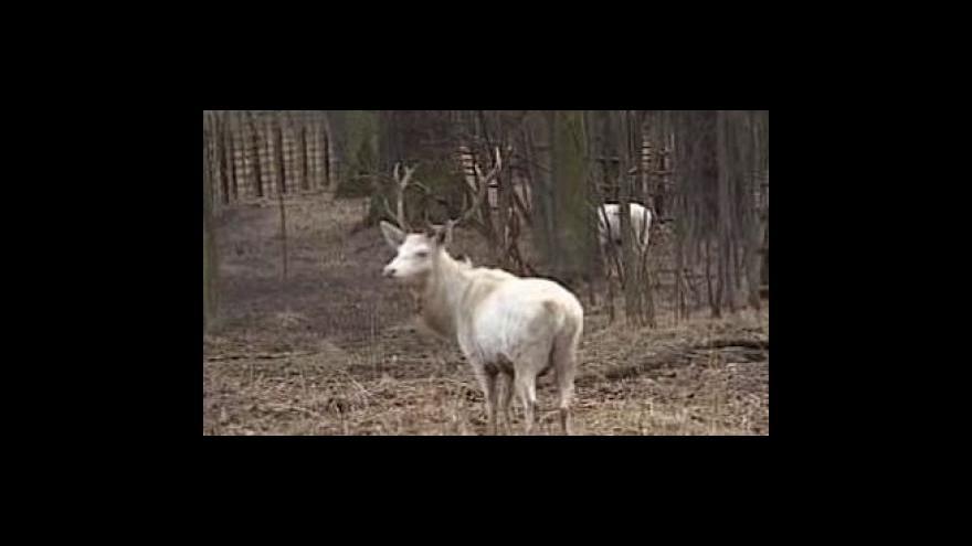 Video Reportáž Luboše Dostála a Vlastimila Weinera