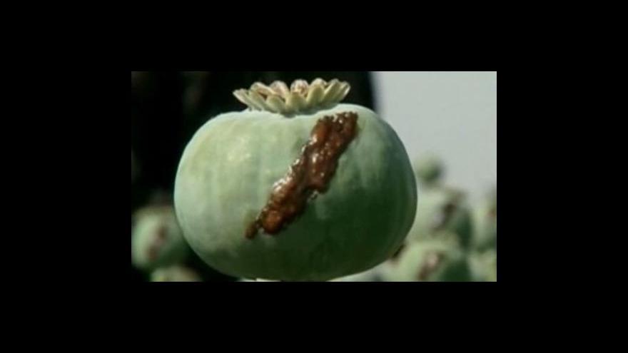 Video V Afghánistánu kleslo pěstování máku o pětinu