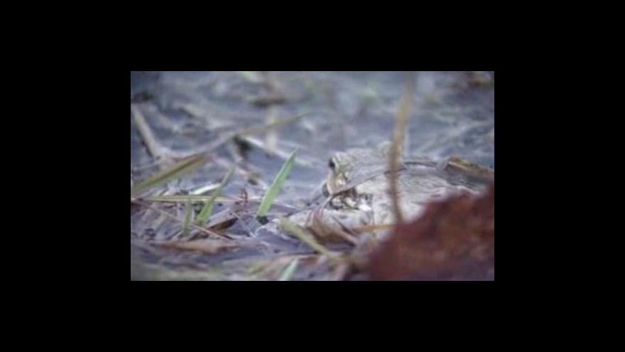 Video Obojživelníci vymírají