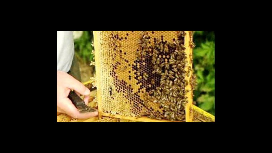 Video Rozhovor s tajemníkem svazu včelařů Miloslavem Peroutkou