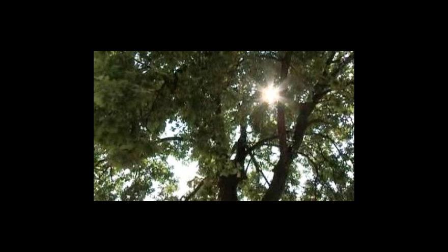 Video V Polsku chtějí kvůli kruhovému objezdu porazit Hitlerův strom