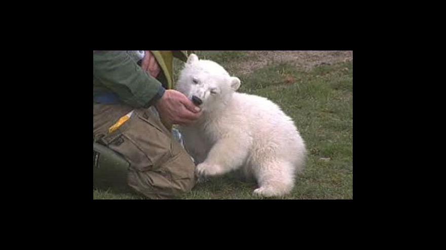 Video Knut zůstane v Berlíně