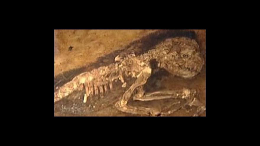 Video Vědci našli fosílii prapředka opic