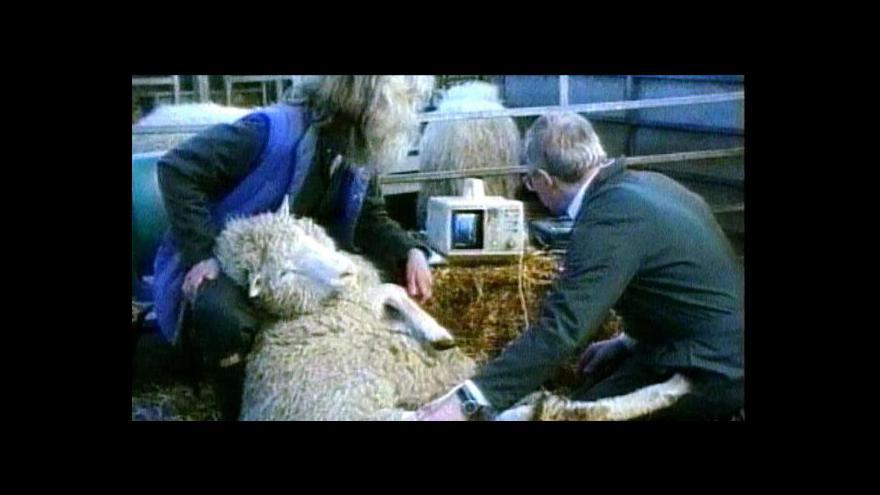 Video Ovce Dolly - první úspěšně naklonovaný savec