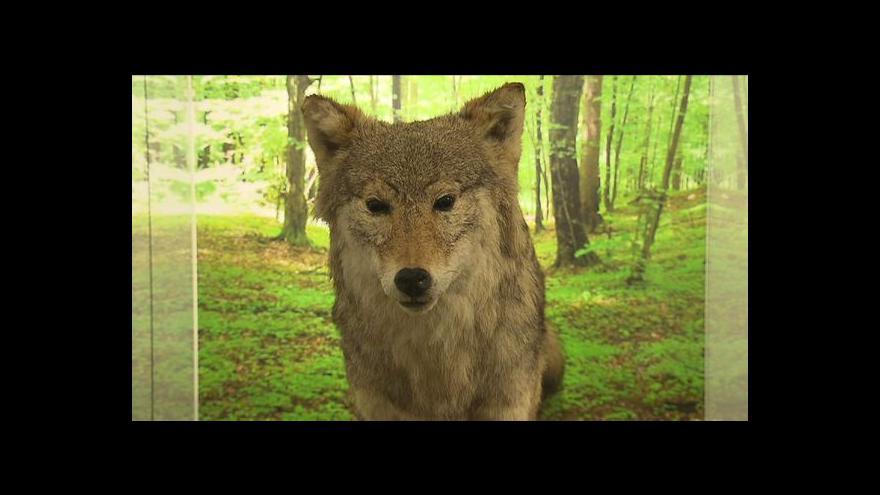 Video Predátorům se v Roztokách koukají na zoubek zblízka